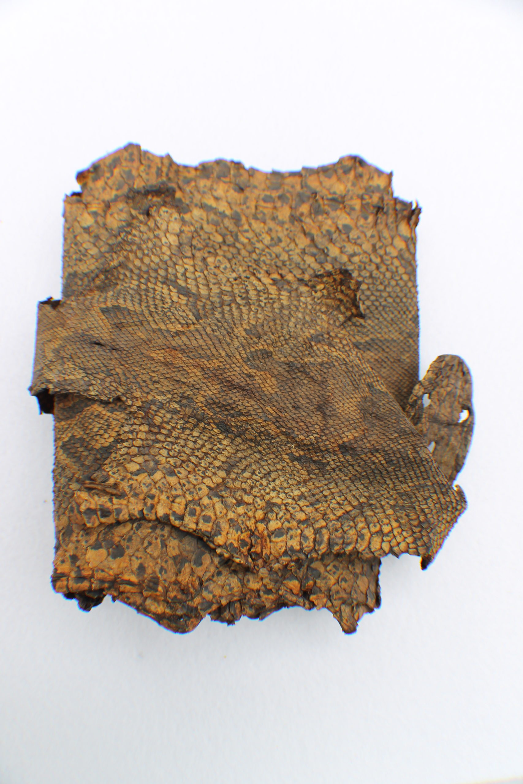 Natural History Fossils to Feathers